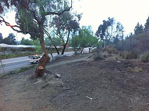 Homeless Camp Clearing